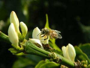 13-abeille-cafe