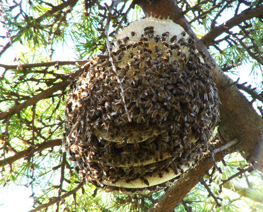 2-abeilles-ruche