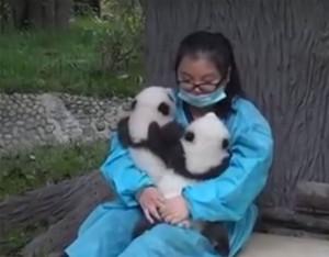 soigneuse-pandas