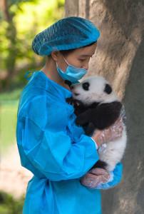 panda-soigneuse