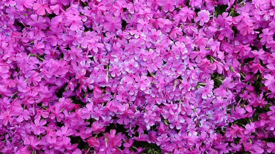 3-plantes-aveugle