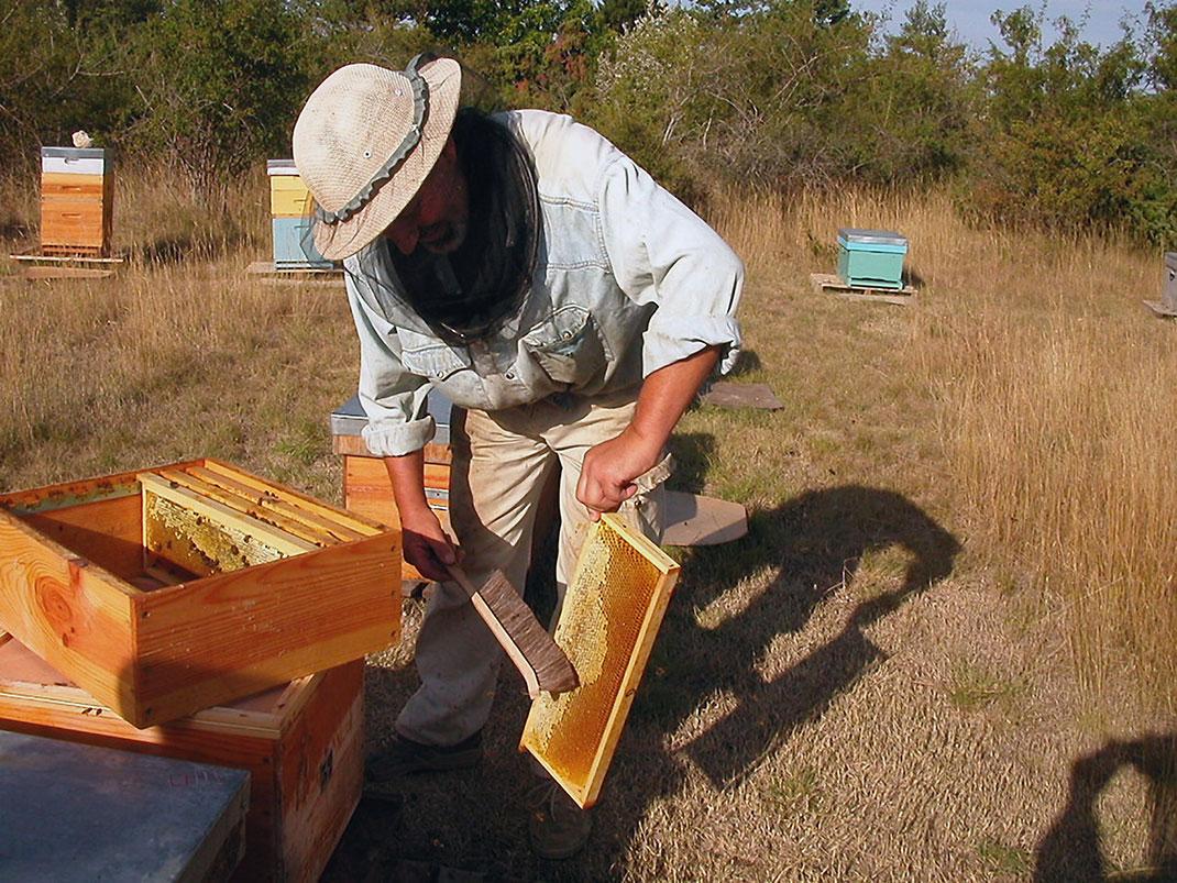 4-abeille-apiculteur