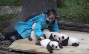 soigneuse-panda