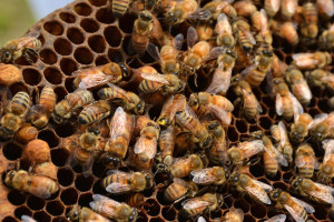 8-abeilles-ruche