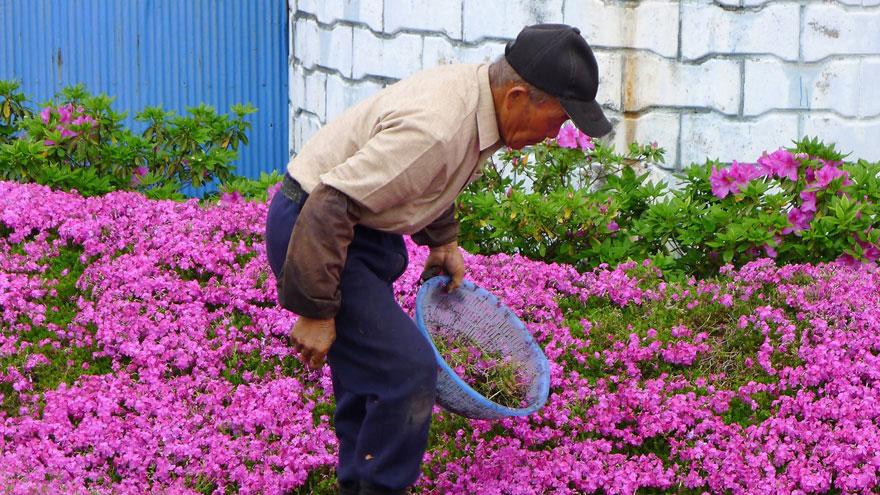 8-plantes-aveugle