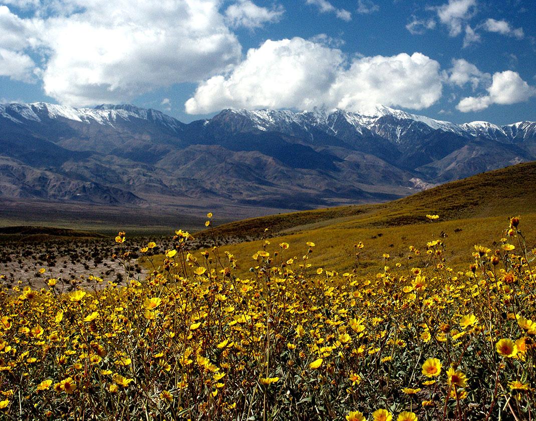 9-fleurs-sauvages