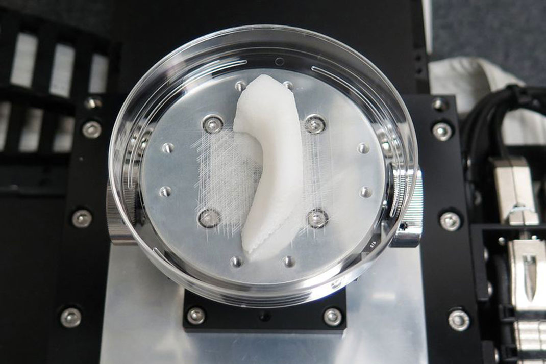 Organes-en-3D-3