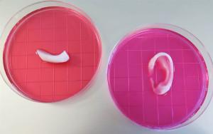 Organes-en-3D-4