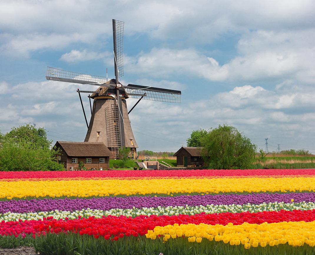 Tulipes-hollande-shutterstock-17