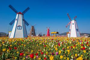 Tulipes-hollande-shutterstock-2