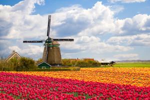 Tulipes-hollande-shutterstock-3