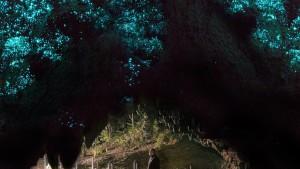 Waitomo Glowworm grotte-8