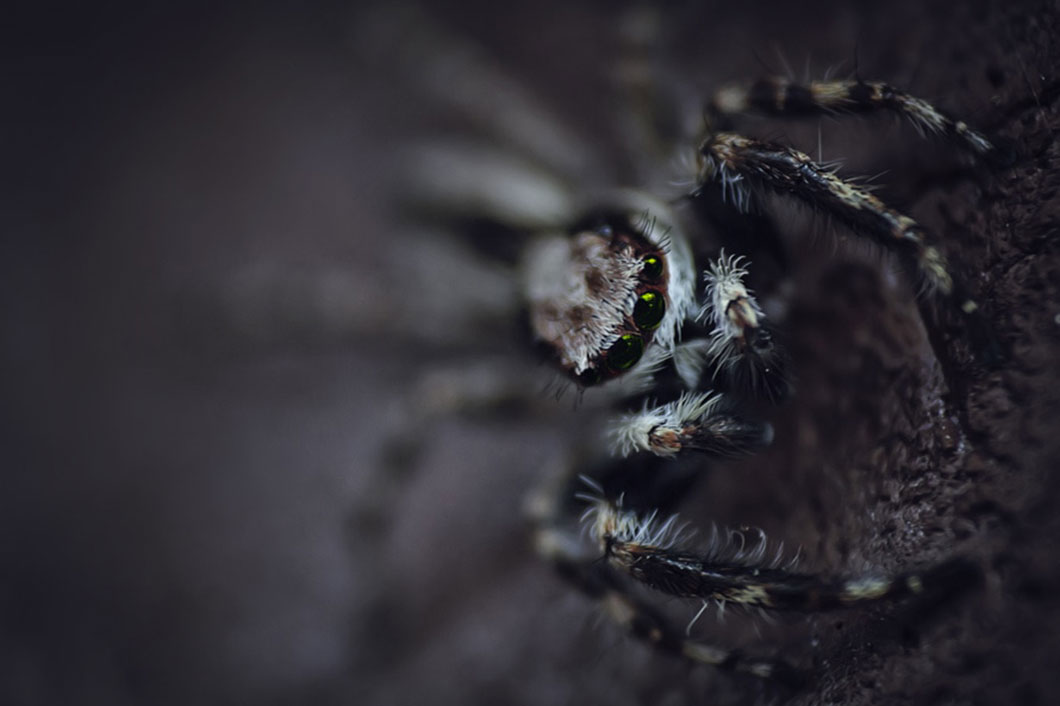 araignee-flou