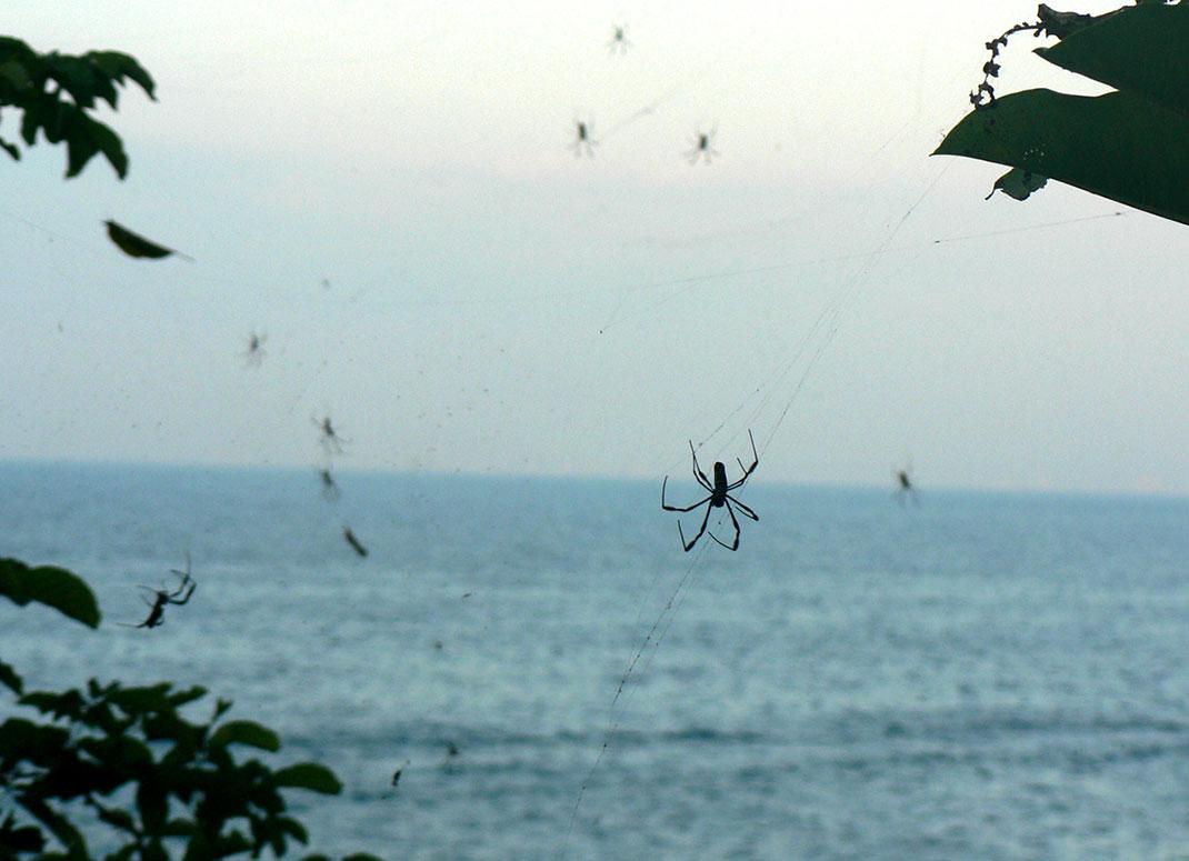 araignees-parachutes