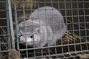 cage-vison