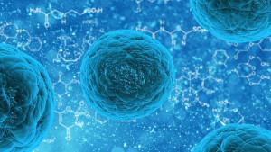 cellule-souche-14
