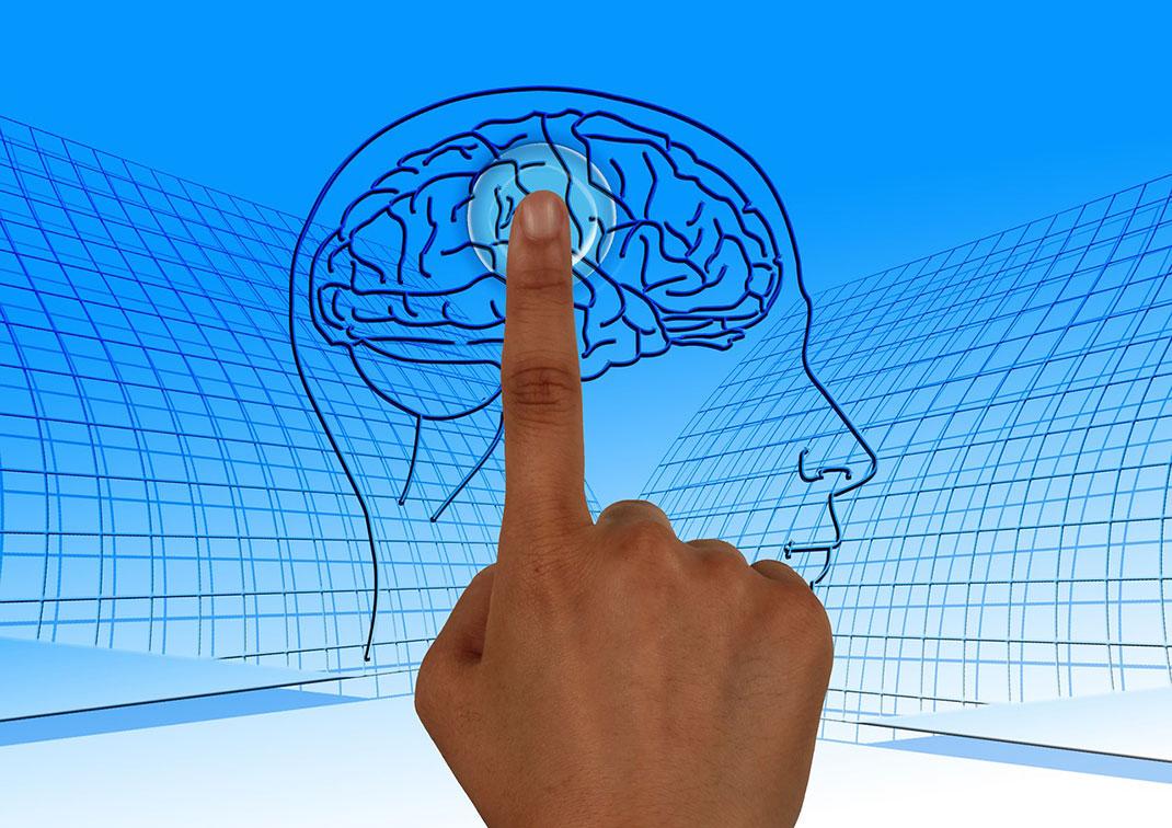 cerveau-indexe-9