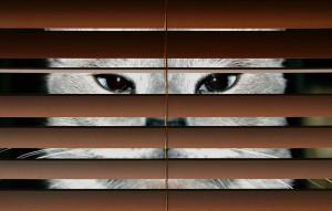 Un chat espion