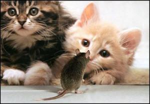 Des chatons et un rat