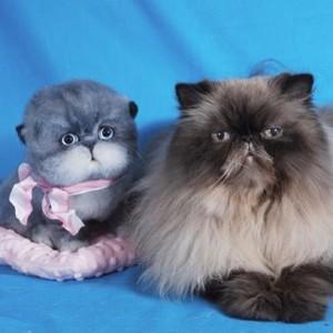 chats-laine