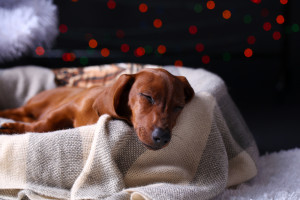 chien-dort-1