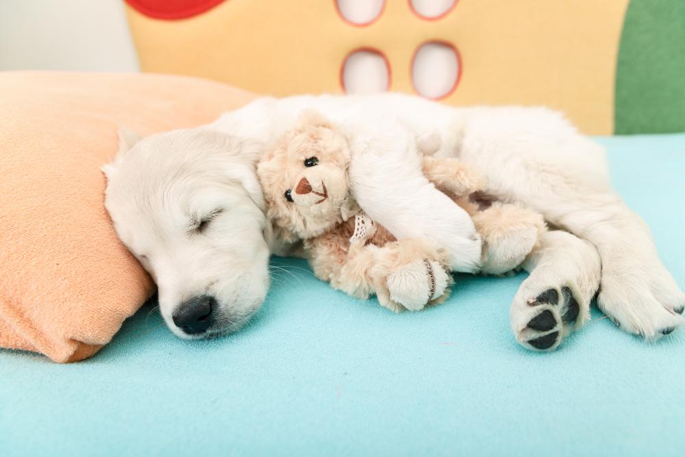 chien-doudou-sommeil