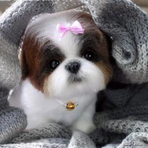 chien-laine