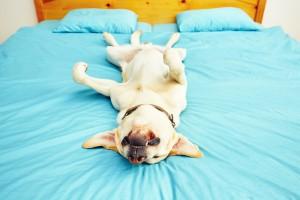 chien-reve-sommeil