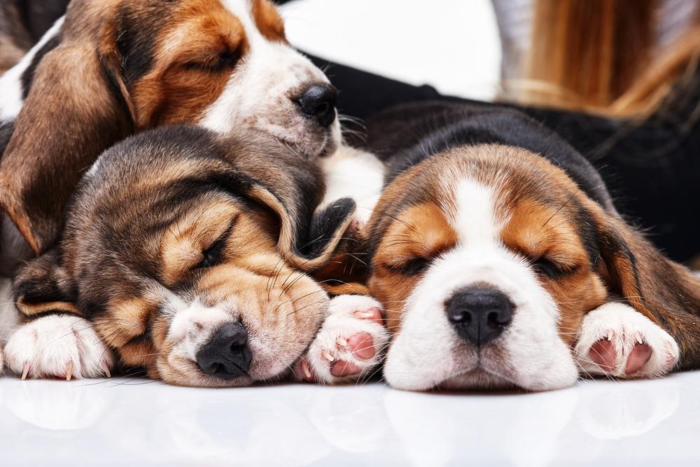 chiens-trois-sommeil
