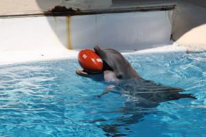 dauphin-ballon-10