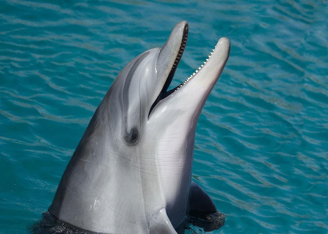 dauphin-dents-3