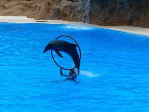 dauphin-saut-anneau-5