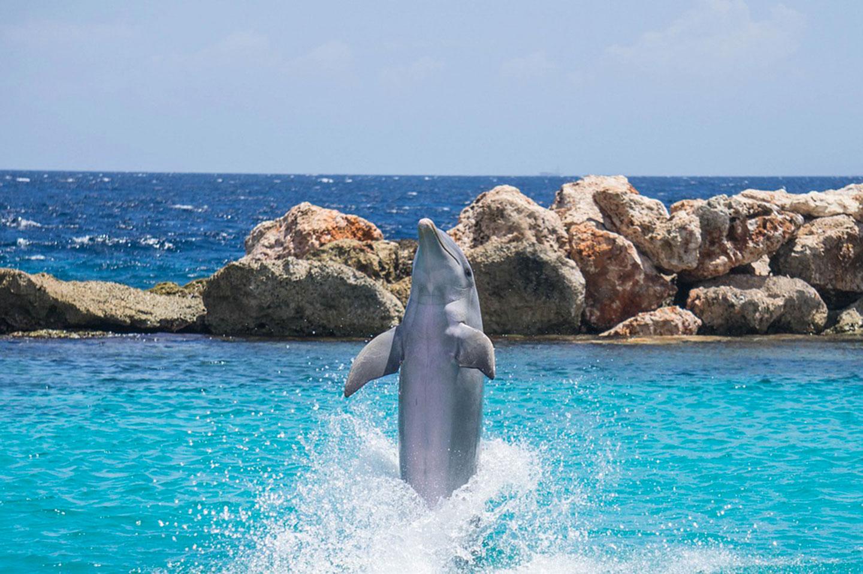 dauphin-saut