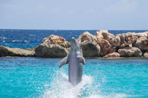 dauphin-saute-mer-rochers-9
