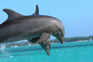 deux-dauphins-en-l'air-2