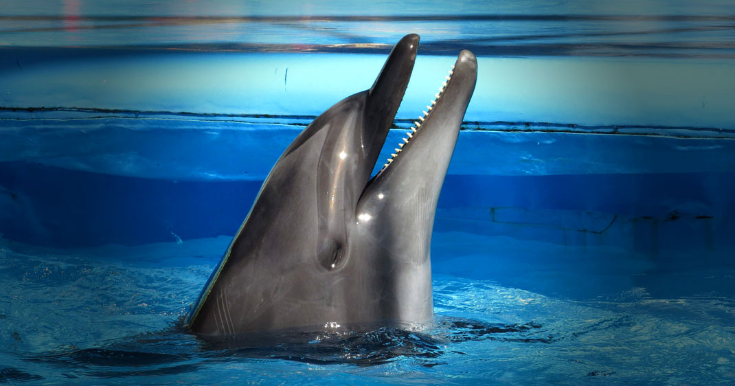 face-obscur-dauphin-une
