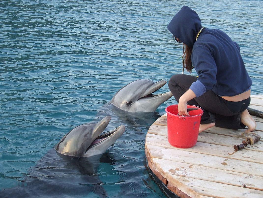 formateur-avec-les-dauphins-4