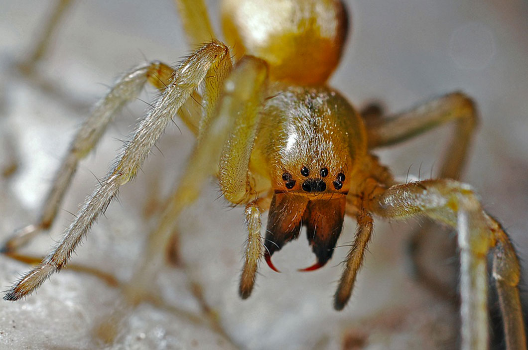 macro-araignee