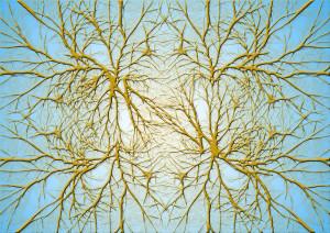 neurones-cerveau-7