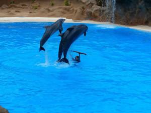 spectacle-de-dauphins-6