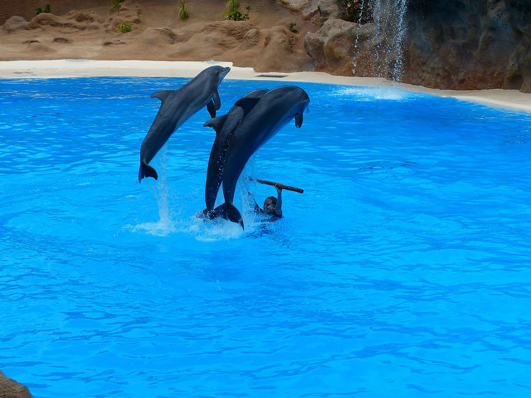 spectacle-de-dauphins-6