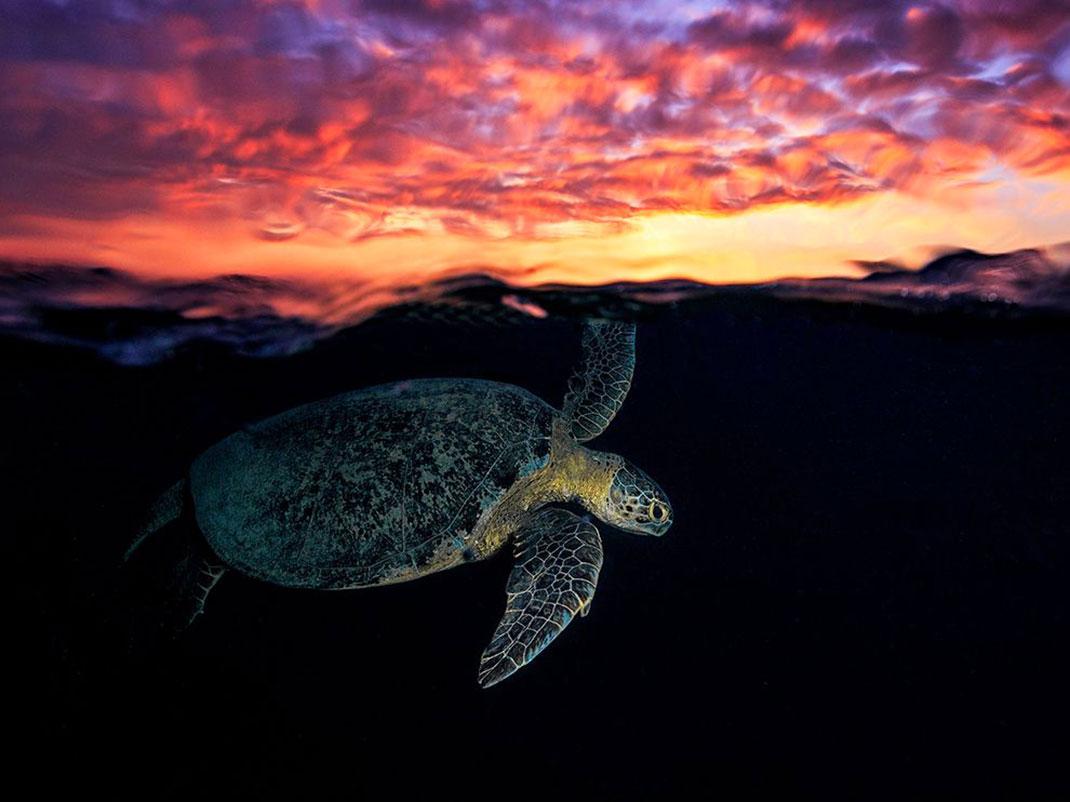 tortue-ciel