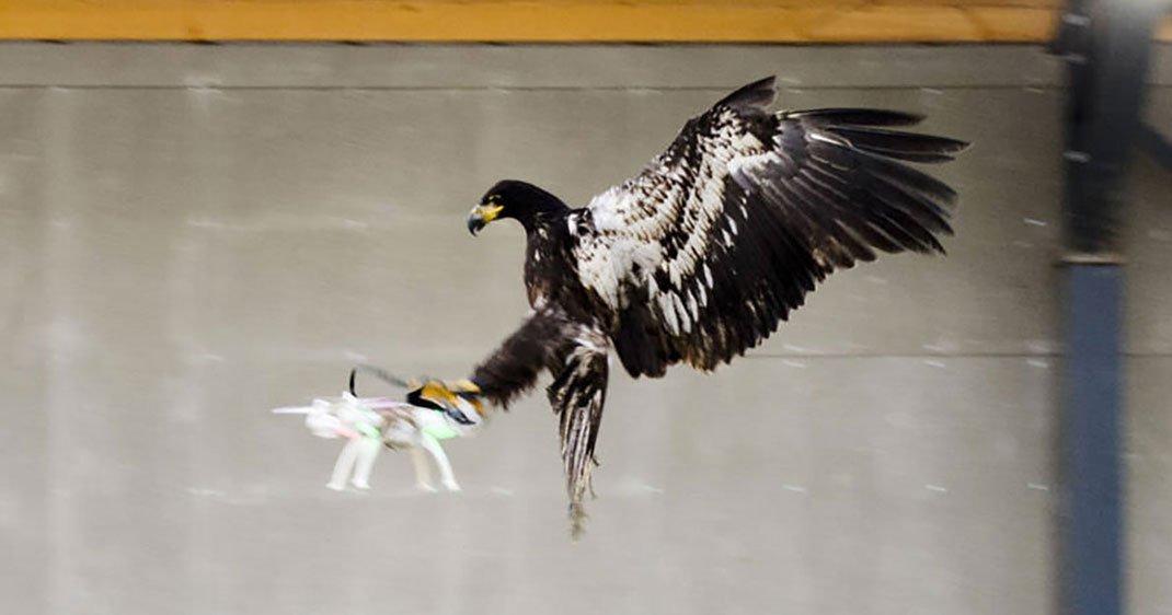 une-aigle-drone