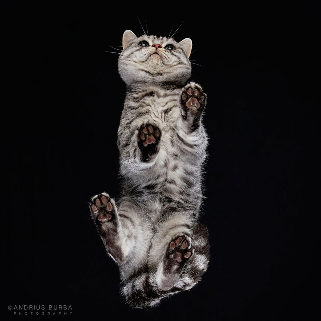 visu-chats-6