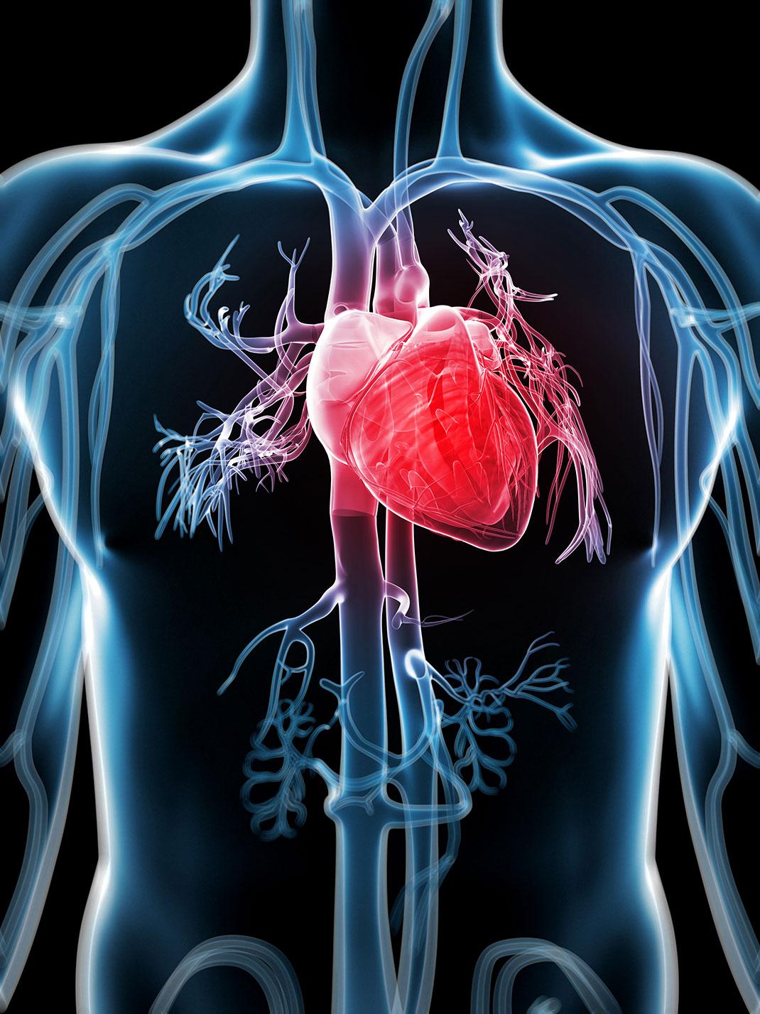 visu-shutter-cardiaque