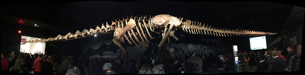 visu-titanosaure-2
