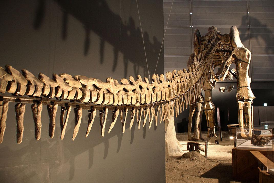 visu-titanosaure-3