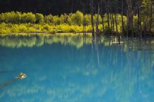 Blue-Pond-8