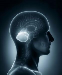 Cervelet-shutterstock