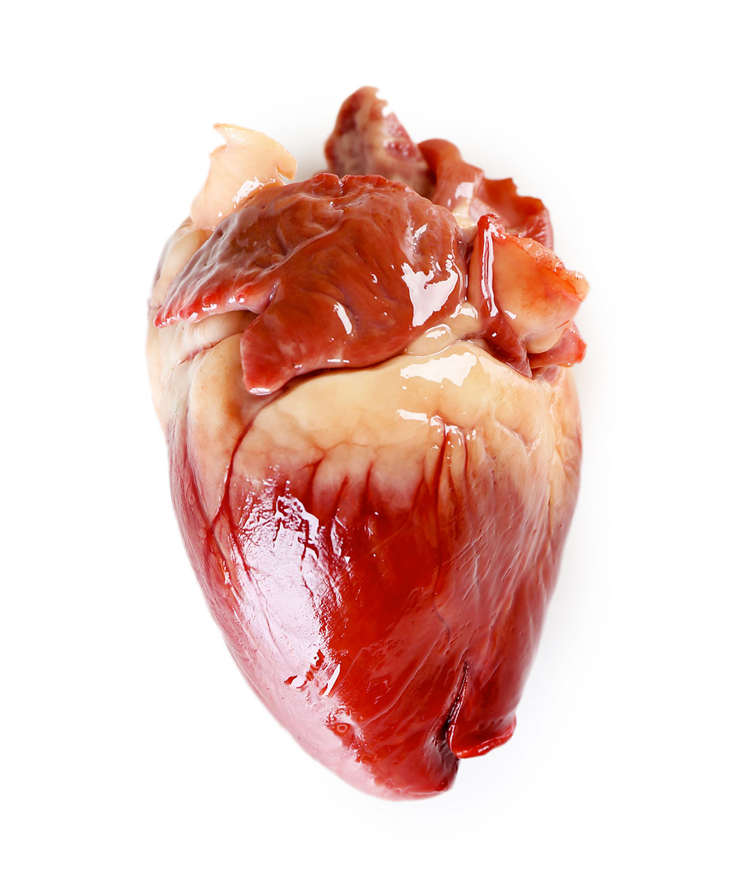 Coeur-humain-shutterstock